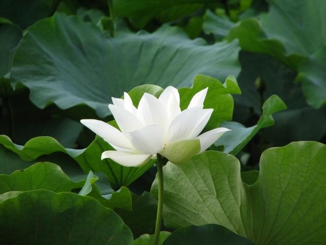 仏壇 処分 ブログ04