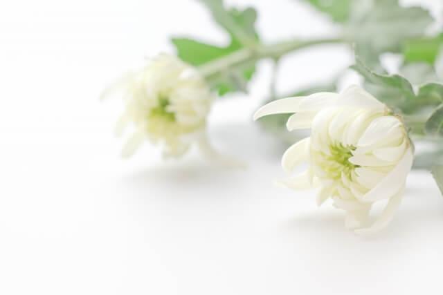 別れ花 ブログ04