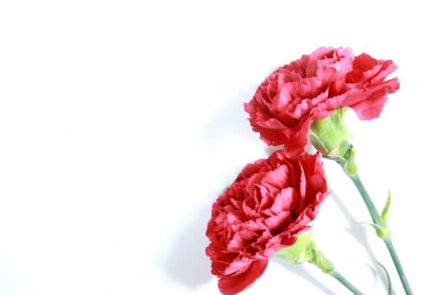 別れ花 ブログ11
